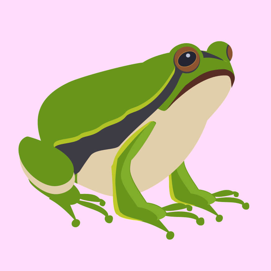 Amphibian Facts for Kids