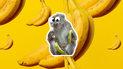 Did you know people eat more bananas than monkeys? I can't remember the last time I ate a monkey...