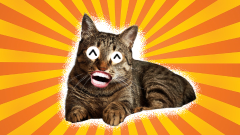 Cat Jokes thumbnail