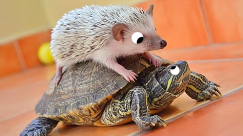 What do you call a hedgehog riding on a turtle? A slowpoke!