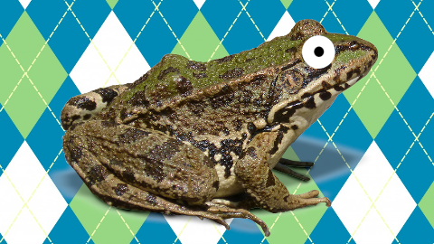 What do you call a toad that gets stuck in the mud? Annoyed and unhoppy!