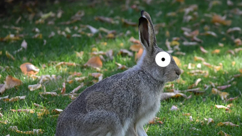 What is a rabbit's favorite restaurant? IHOP, of course!