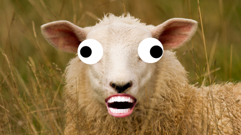 What is a sheep's favorite fruit? A baaaaa-nana!