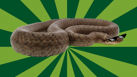 What's a snake's favorite letter? The letter 'Q'! Okay fine, you're right it's the letter 'S'...