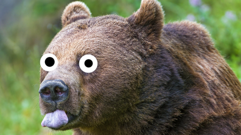 What should you do if you find a bear in the bathroom? Run away and close your nose!