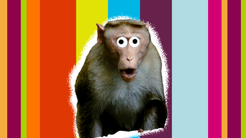 Monkey Jokes thumbnail