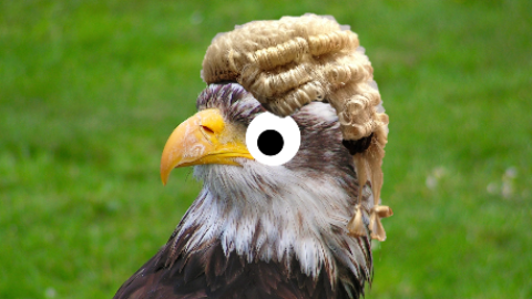 Where's the best place to spot a bald eagle? At the wig shop!