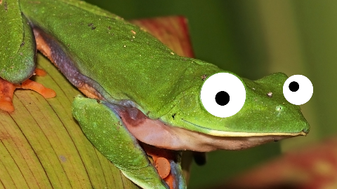 Why are frogs always so carefree?  They just eat whatever bugs them!
